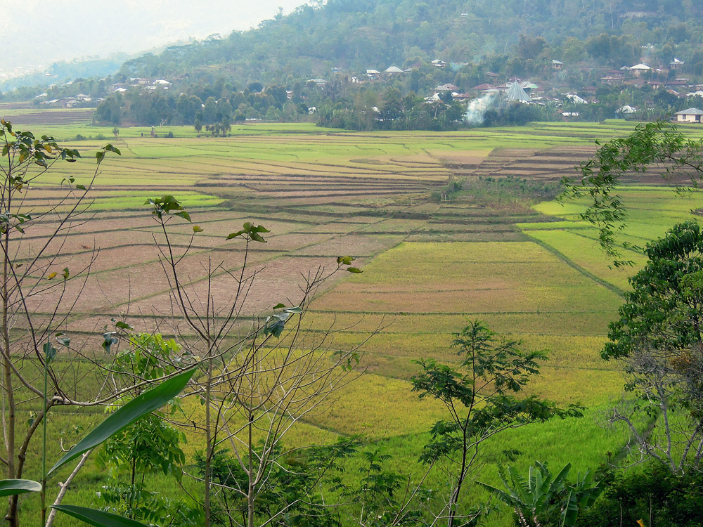 Ruteng, Spiderweb, Reisfelder