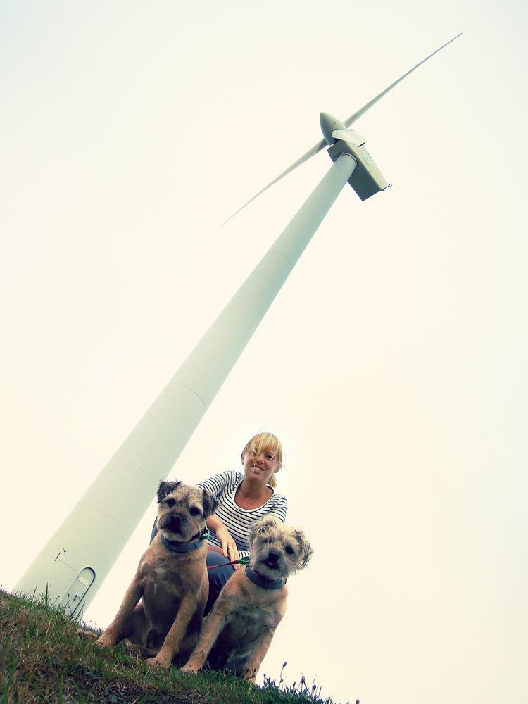 Wellington Windmill