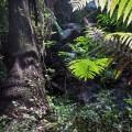 McLaren Falls Park Tauranga
