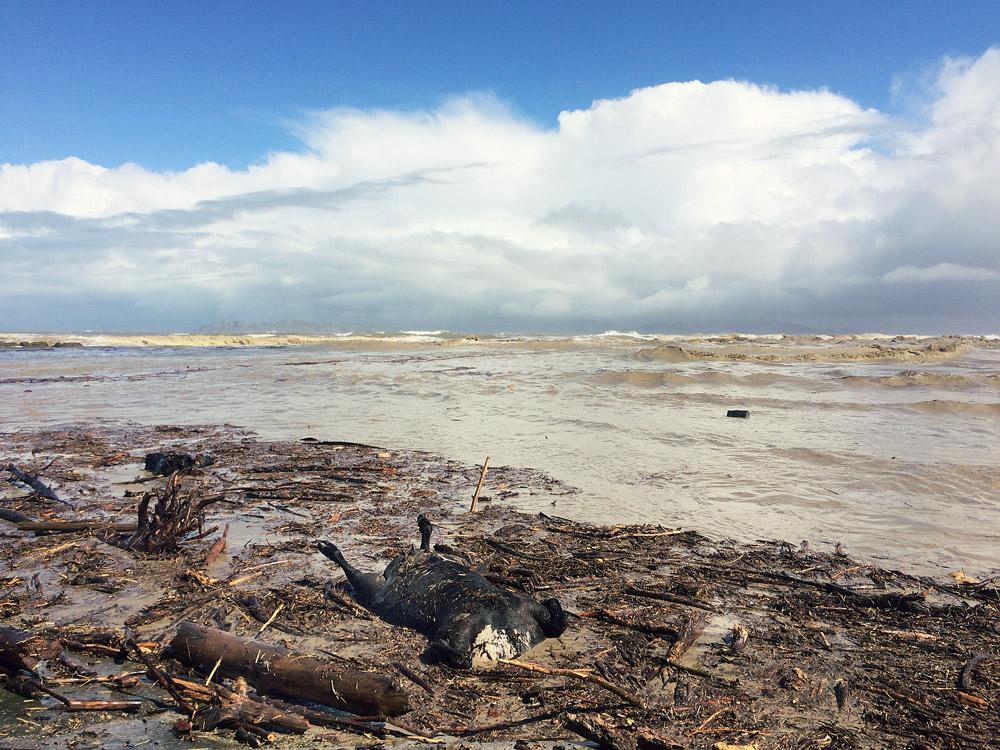 Gisborne-Hochwasser-beach