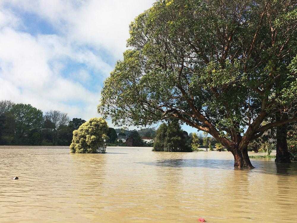 Gisborne-Hochwasser-riverside-trees