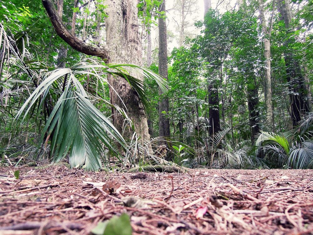 Greys-Bush-Scenic-Reserve-Wald