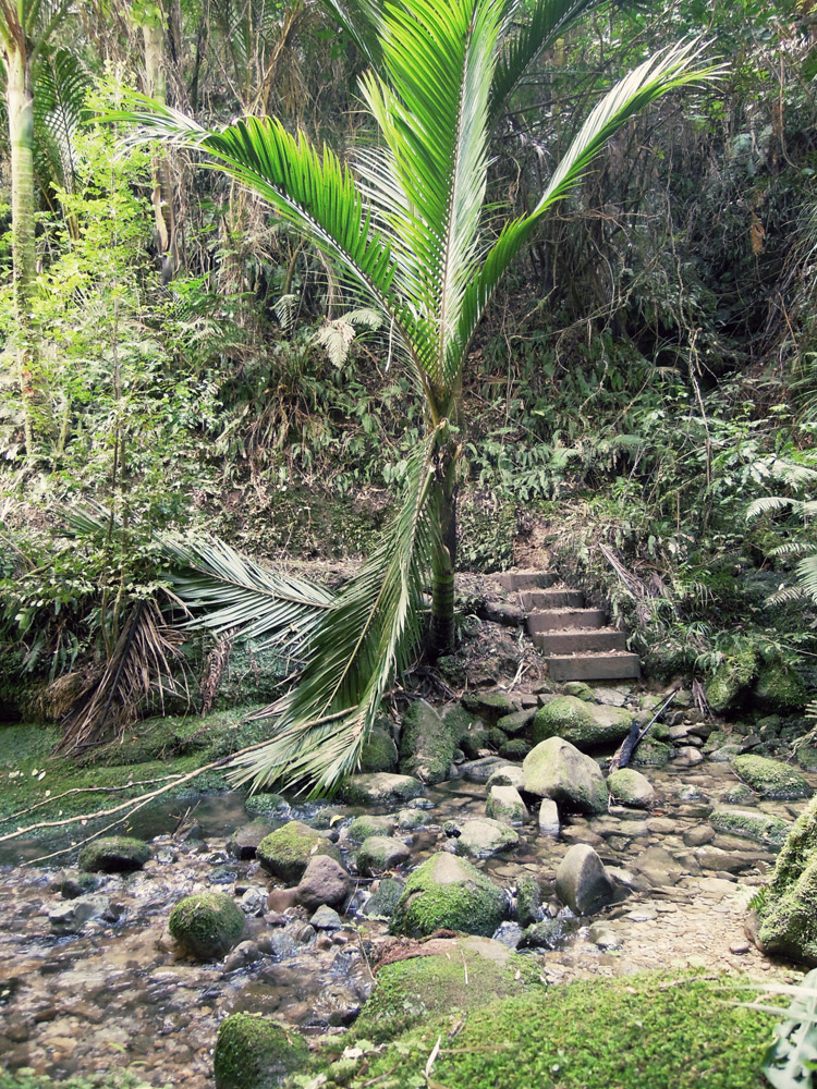 Morere-springs-scenic-reserve-forrest-2