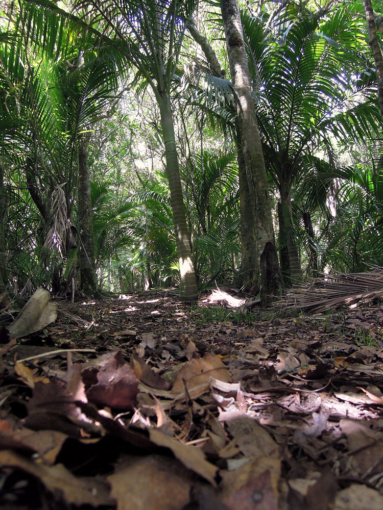 Morere-springs-scenic-reserve-forrest-5