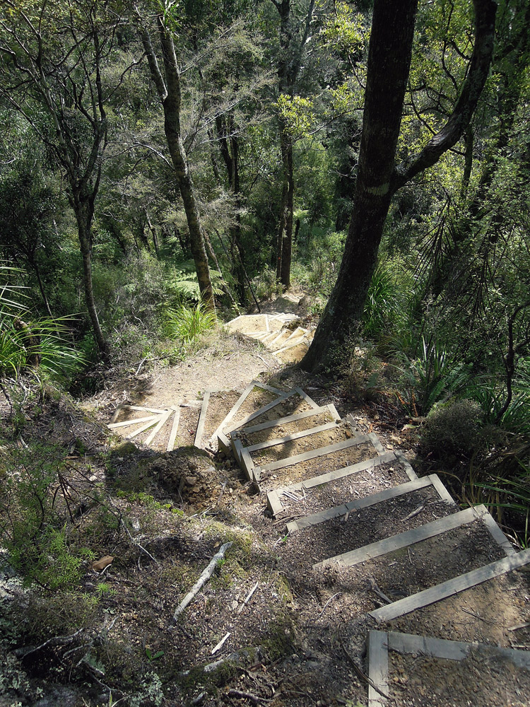 Morere-springs-scenic-reserve-forrest-stairs
