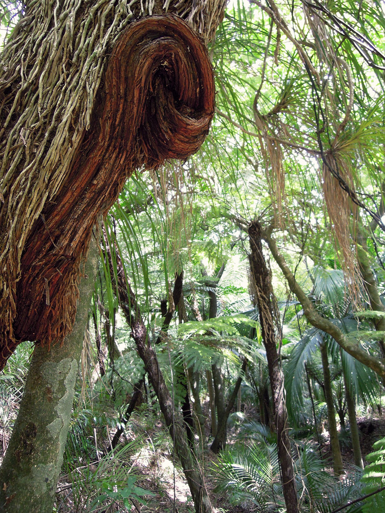 Morere-springs-scenic-reserve-forrest-tree