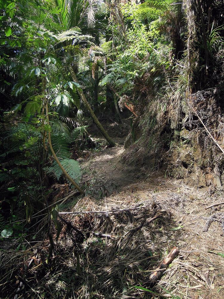 Morere-springs-scenic-reserve-forrest