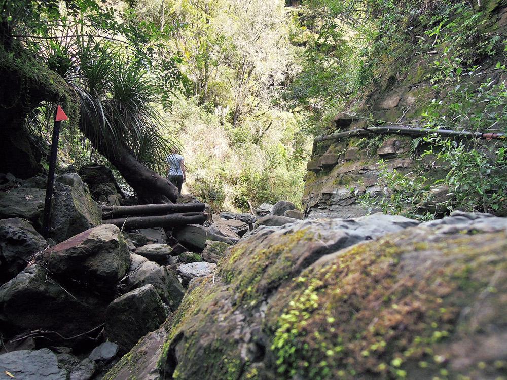 Morere-springs-scenic-reserve-river