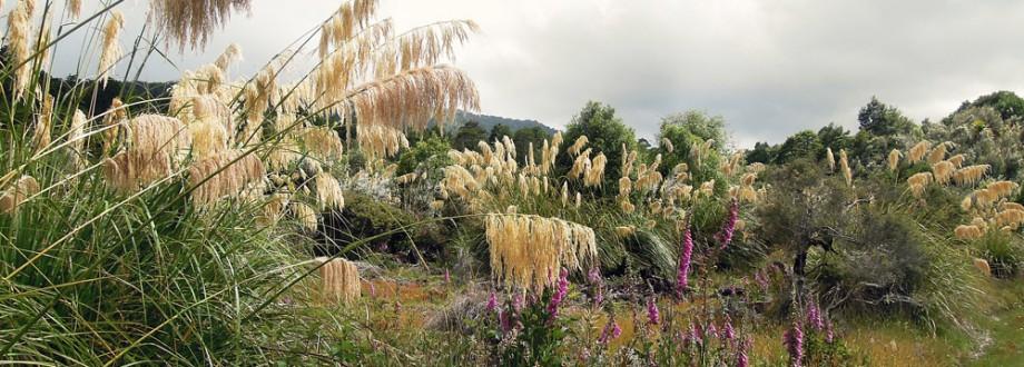 Lake-Waikaremoana-Neuseeland-bush