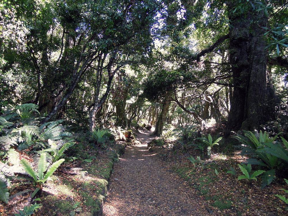 Lake-Waikaremoana-Neuseeland-forrest-walk
